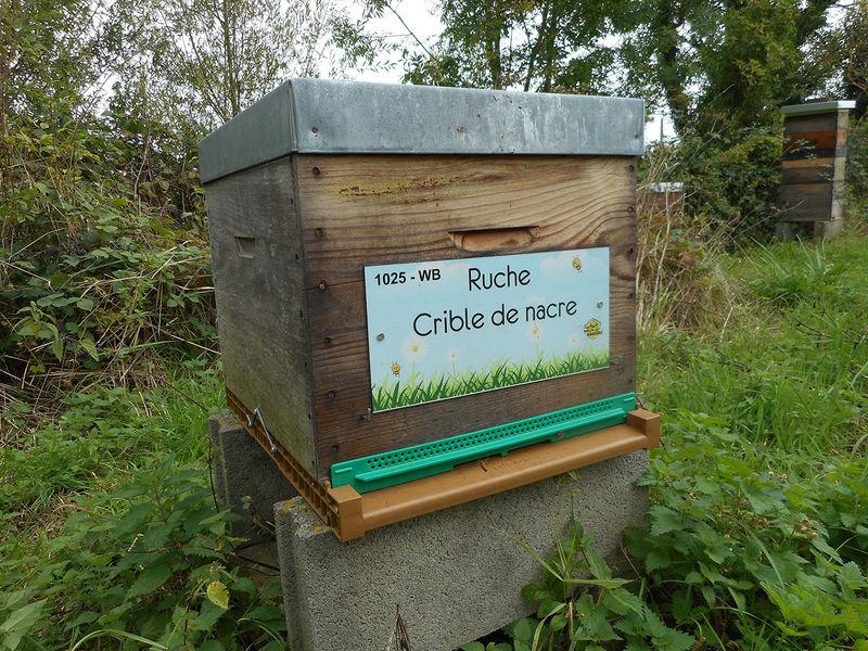 La ruche Crible de nacre