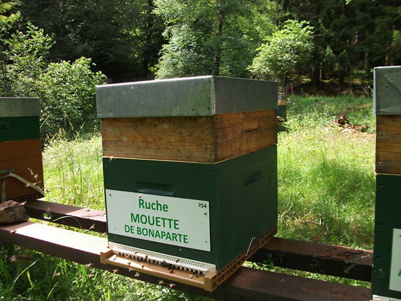 La ruche Mouette de bonaparte