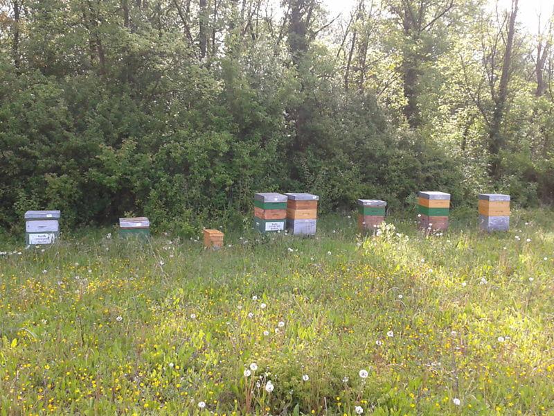 La ruche Cuivre des marais
