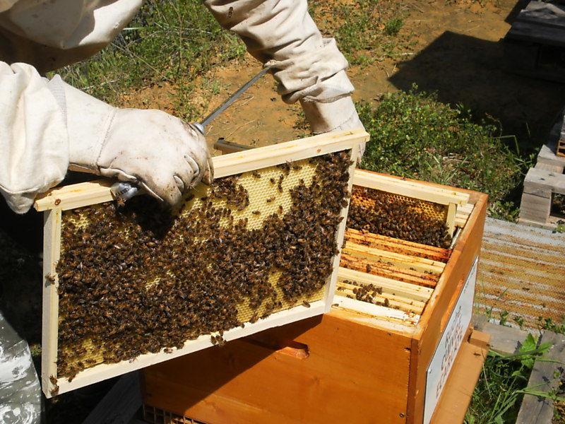 La ruche Cuivre écarlate