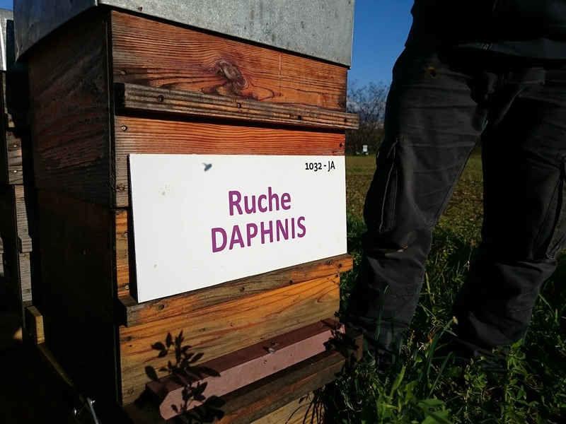 La ruche Daphnis
