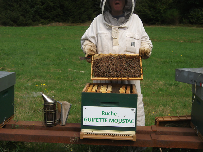 La ruche Guifette moustac