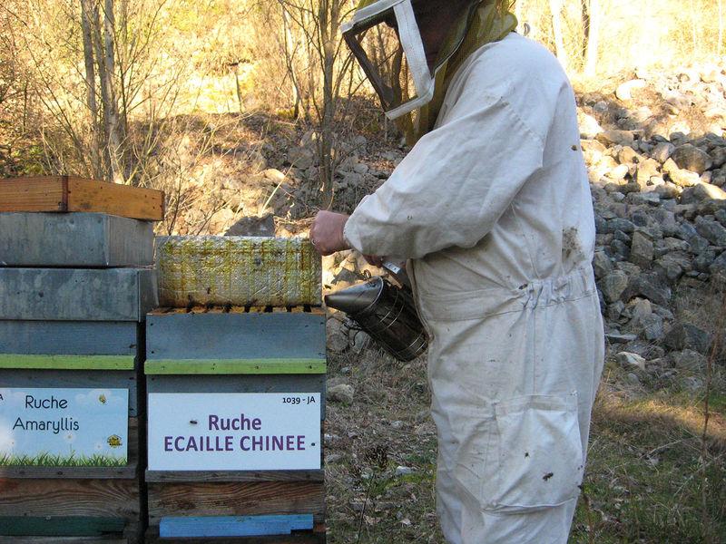 La ruche Ecaille chinee