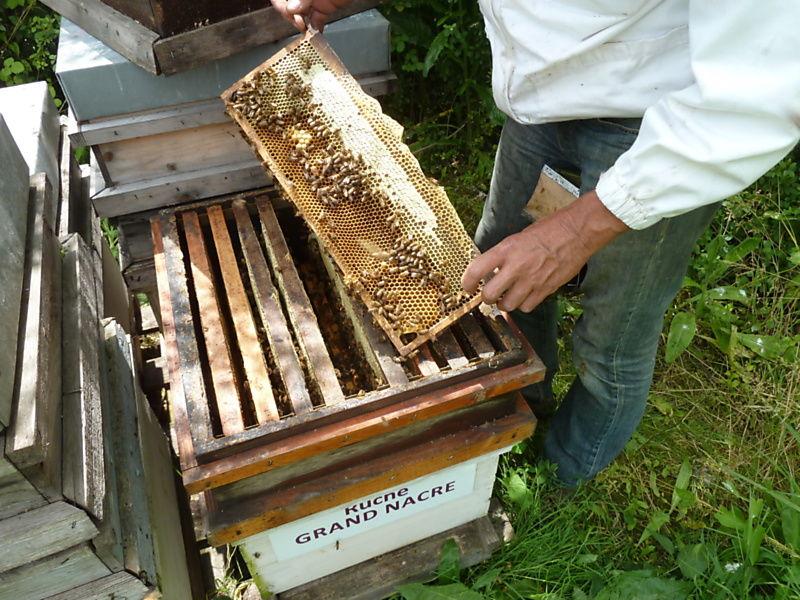 La ruche Grand nacre