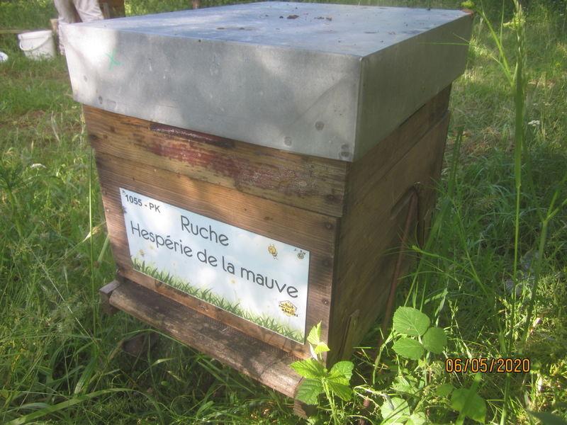 La ruche Hespérie de la mauve
