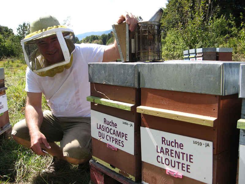 La ruche Lasiocampe du cypres