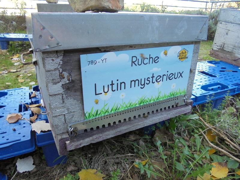 La ruche Lutin mysterieux