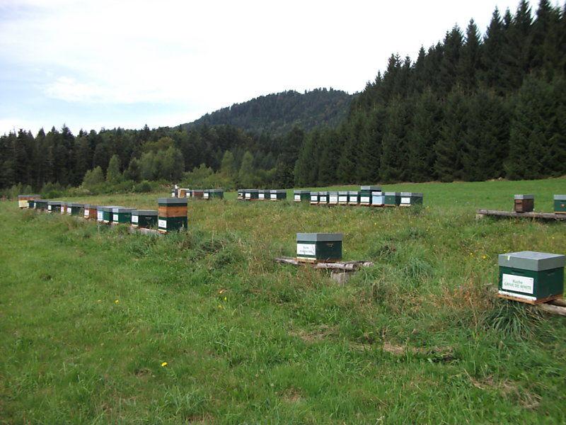 La ruche Coucou gris