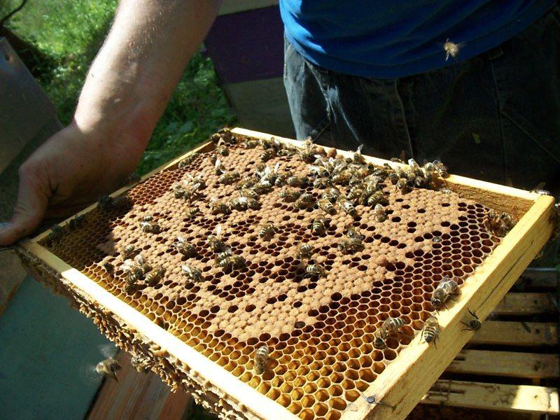La ruche Machaon