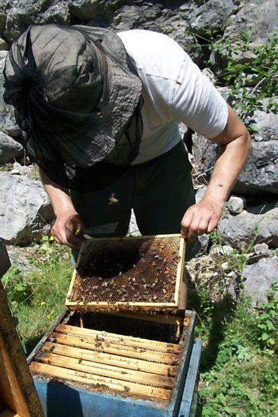 La ruche Mars danudien