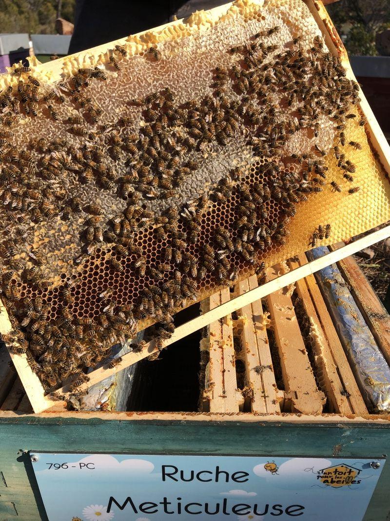 La ruche Meticuleuse