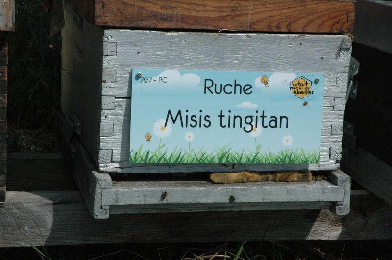 La ruche Misis tingitan