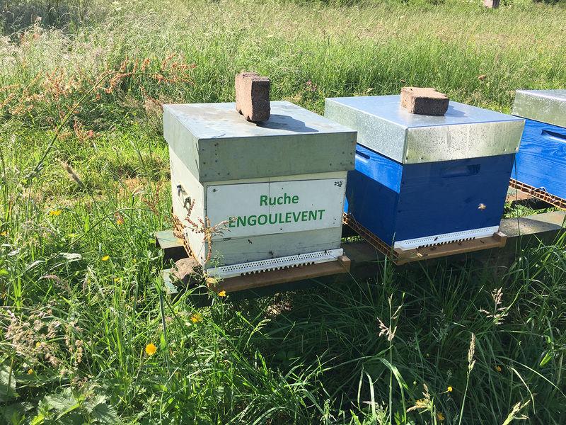 La ruche Engoulevent