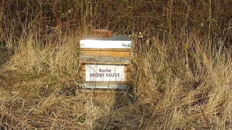 La ruche Moire fauve
