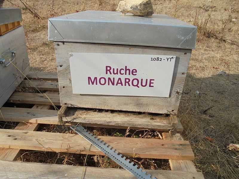 La ruche Monarque