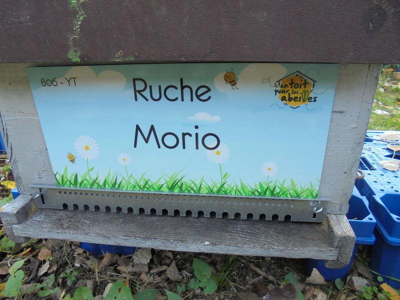 La ruche Morio