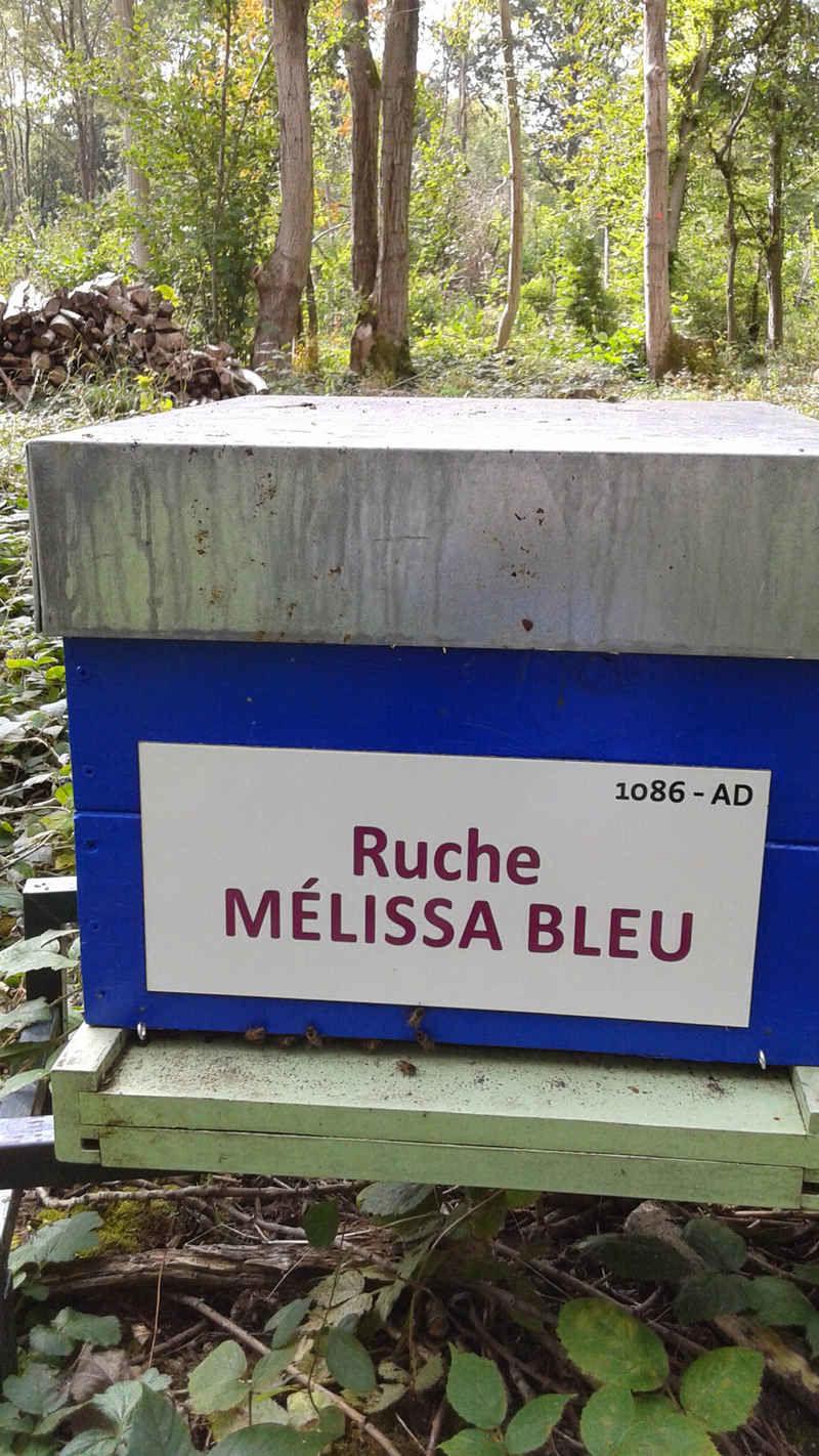 La ruche Mélissa bleu