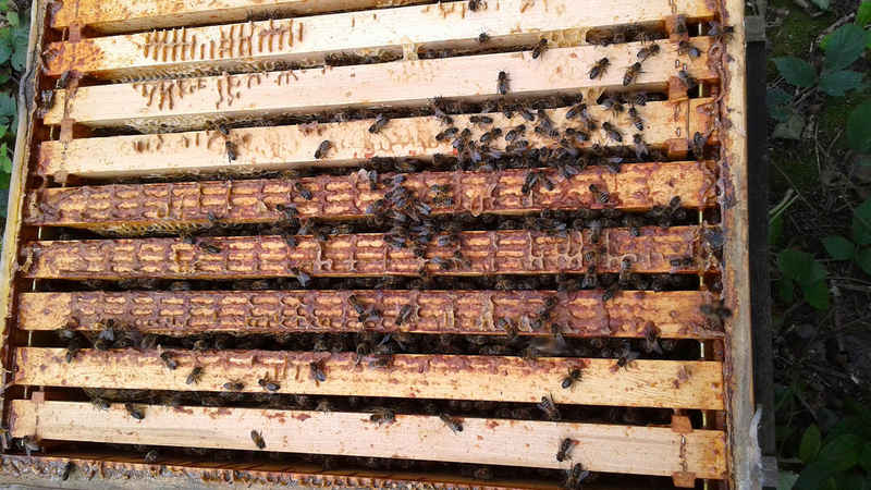 La ruche Noctuelle