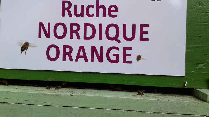 La ruche Nordique orange