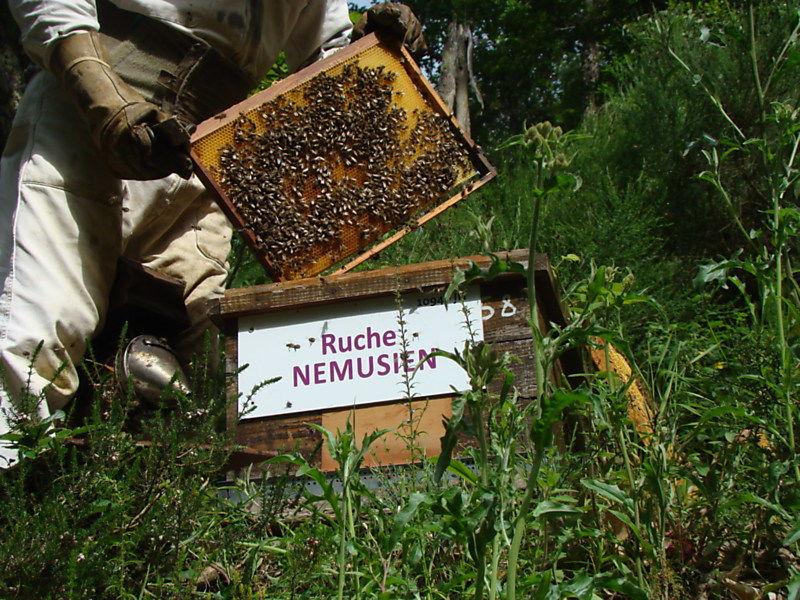 La ruche Nemusien