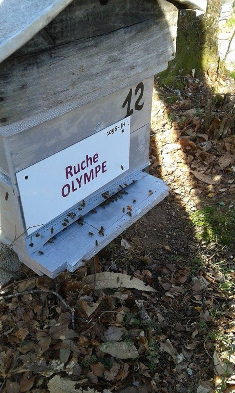 La ruche Olympe