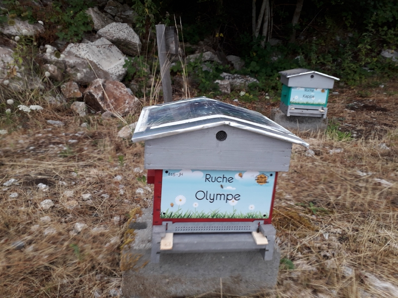 La ruche Olympe