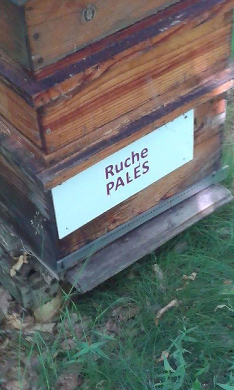 La ruche Pales