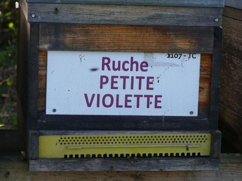 La ruche Petite violette