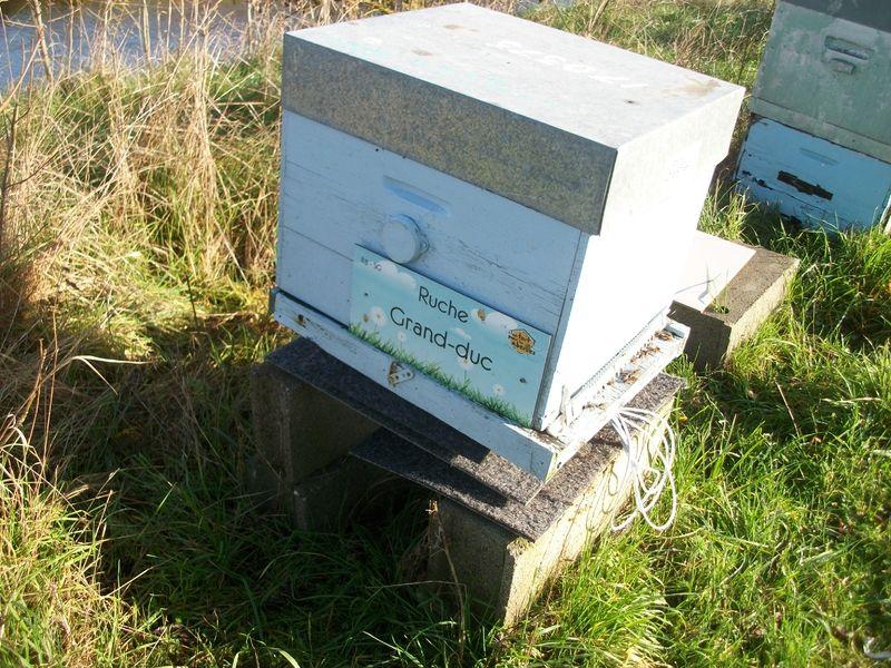 La ruche Grand-duc