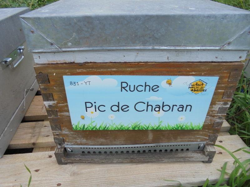 La ruche Pic de Chabran