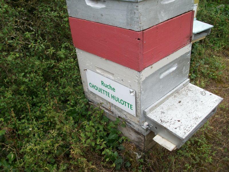 La ruche Chouette hulotte
