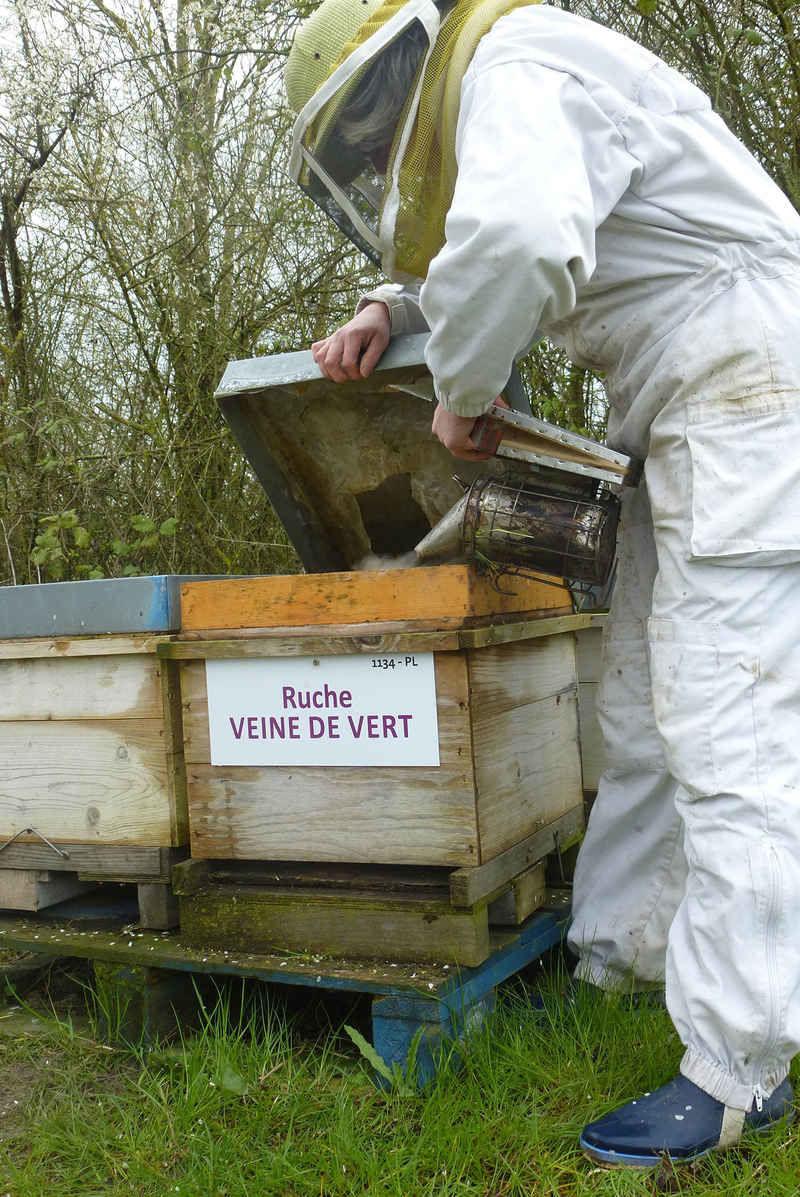 La ruche