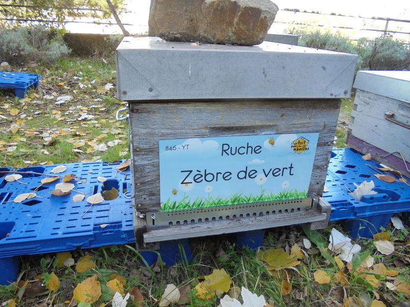 La ruche Zèbre de vert
