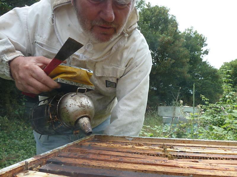 La ruche Hibou des marais