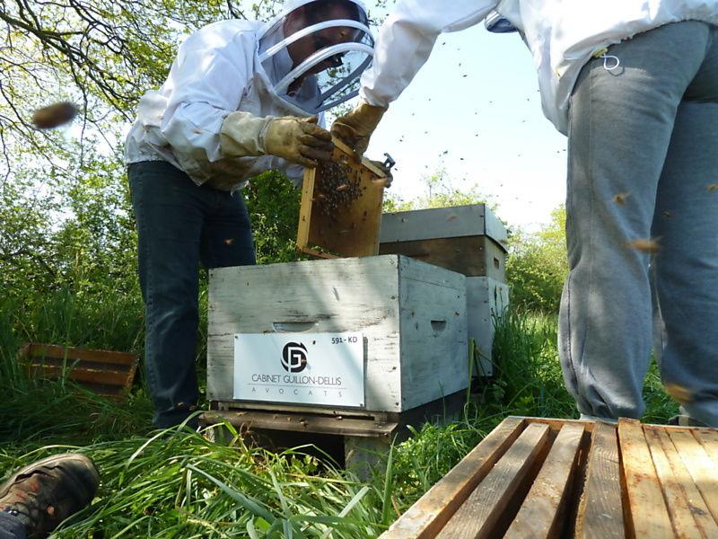 La ruche Cabinet guillon-dellis
