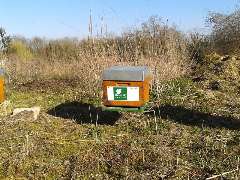 La ruche BRIENNE JARDIN