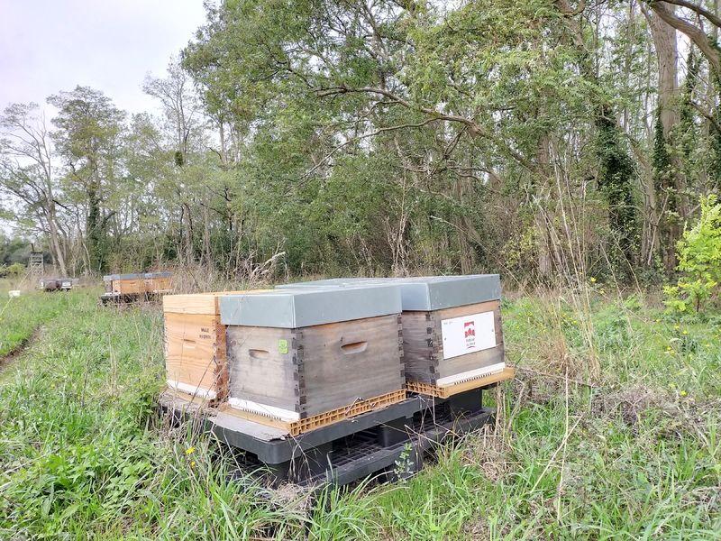 La ruche MON ABRI