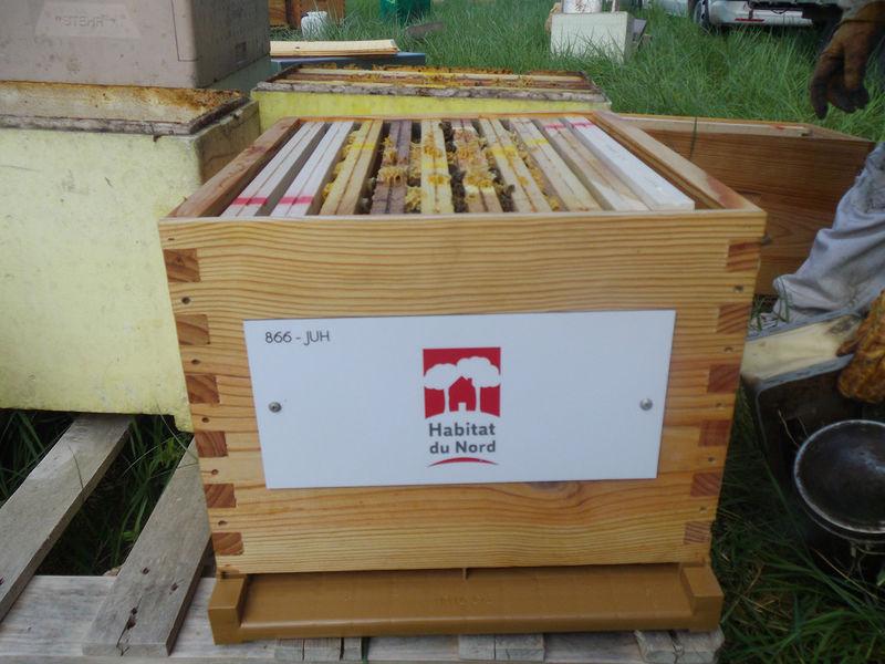 La ruche Habitat du Nord