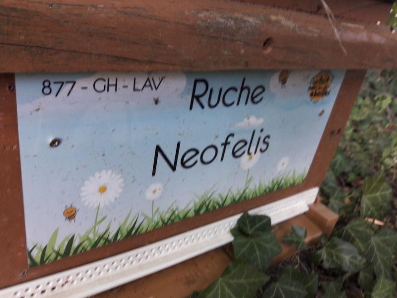 La ruche Neofelis