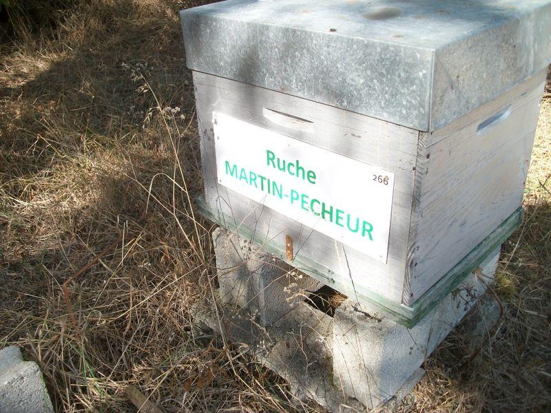 La ruche Martin-pêcheur