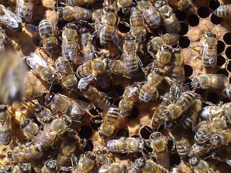 La ruche Polygone gris