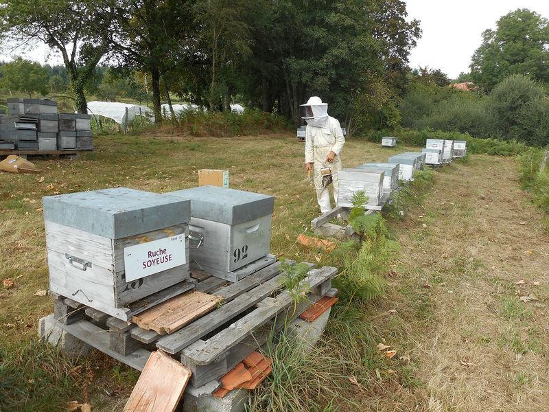 La ruche Soyeuse
