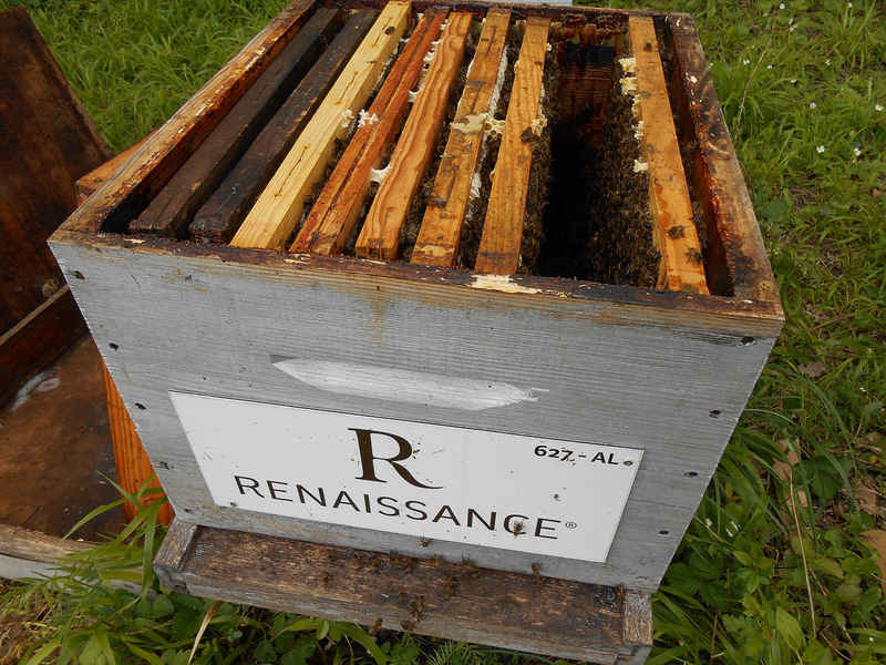 La ruche HOTELS RENAISSANCE