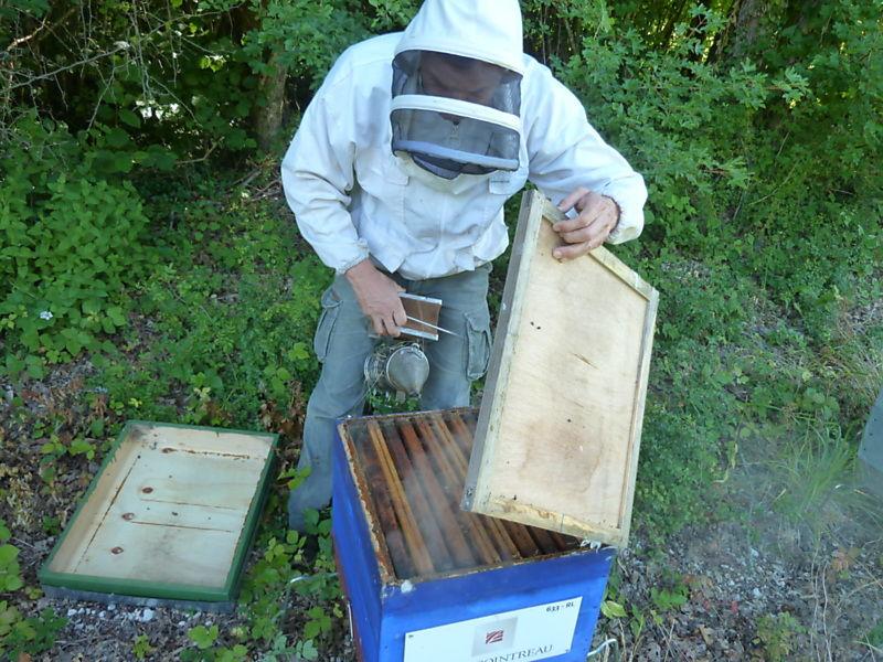 La ruche REMY COINTREAU
