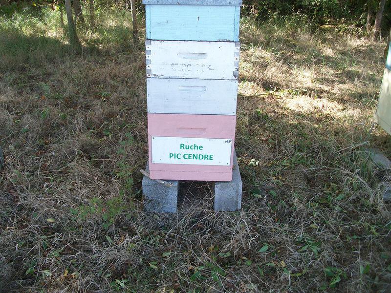La ruche Pic cendré