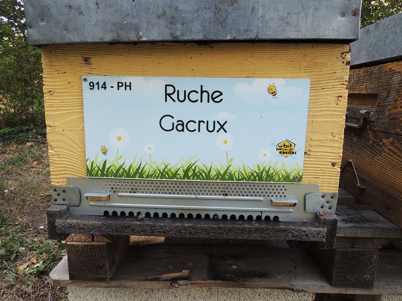 La ruche Gacrux
