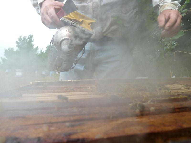 La ruche Pie-grièche