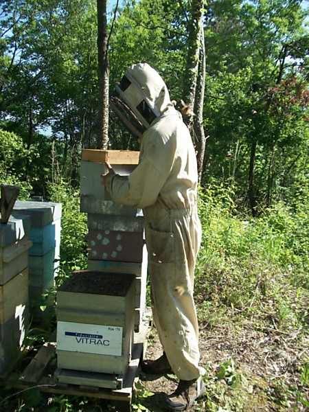La ruche FIDUCIAIRE VITRAC