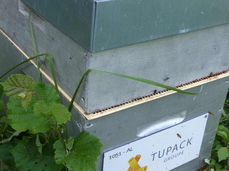 La ruche ALLPACK - TUPAK