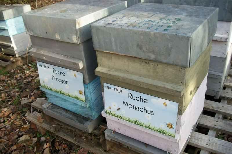 La ruche Monachus